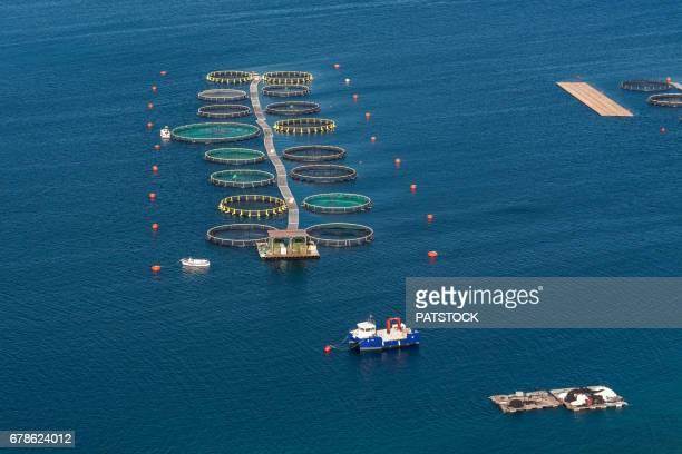 Adriatic sea fish farm