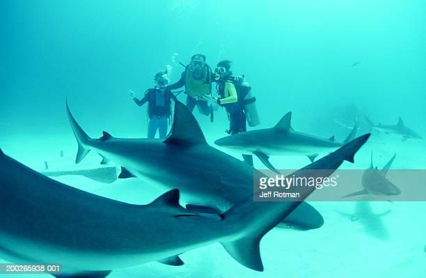 Adult and boy divers on sea floor with Caribbean reef sharks