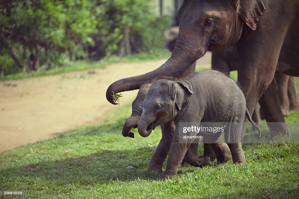 Dois adulto e bebê Elefante : Foto de stock