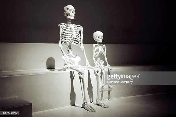 erwachsene und kind skelett sitzt zusammen, als ob wartet auf etwas - menschliches skelett stock-fotos und bilder