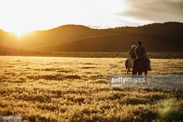 adult cowboys riding galloping horses - ranch stock pictures, royalty-free photos & images