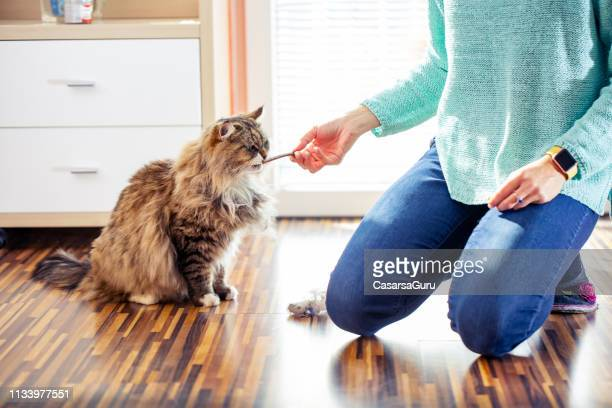 adult female pet owner feeding her siberian cat - snack stock pictures, royalty-free photos & images