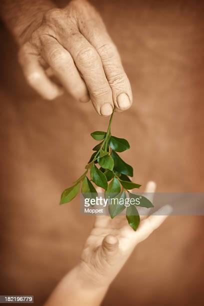 Adult gives Child a Leaf