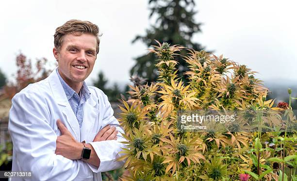 adult male physician standing next to cannabis plant - medical cannabis stock photos and pictures