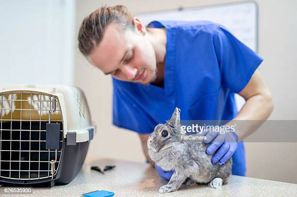Adult male veterinarian doing a checkup on a bunny