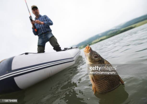 adult man fishing from a boat. - carp stock photos and pictures