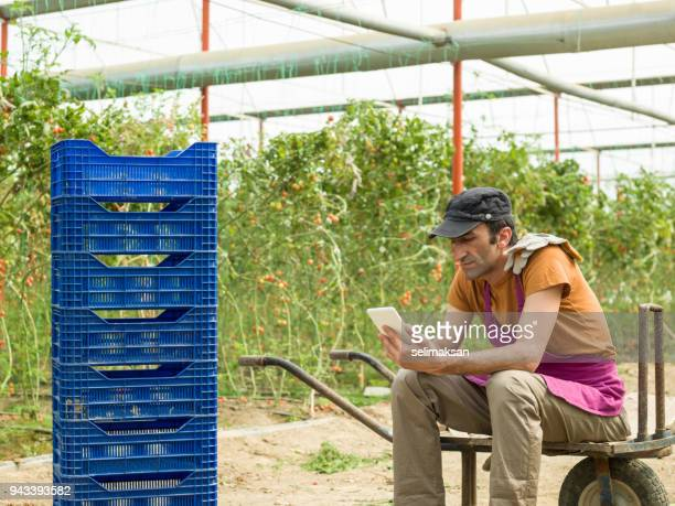 Adult Man Using Digital Tablet While Working In Modern Tomato Greenhouse