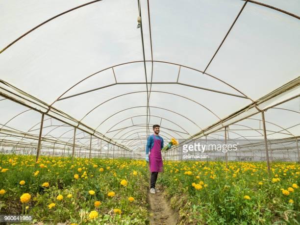 Adult Man Working In Modern Cut Flower Greenhouse