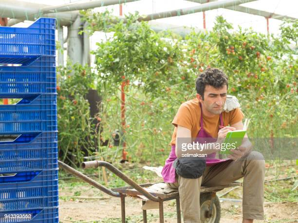 Adult Man Working In Modern Tomato Greenhouse