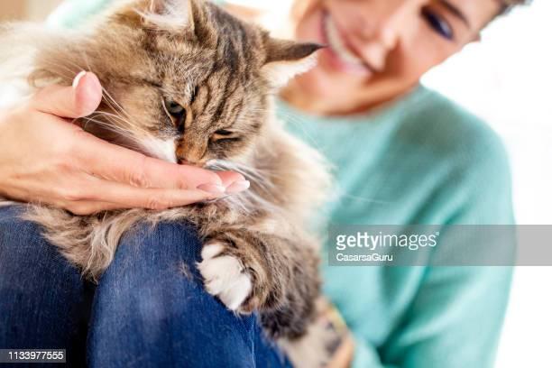 volwassen vrouw die haar siberische kat voedt - voeren stockfoto's en -beelden