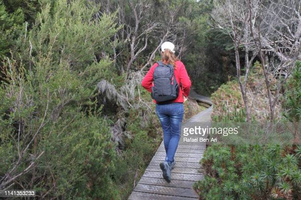 Adult woman hiking at  Cradle Mountain-Lake St Clair National Park Tasmania Australia