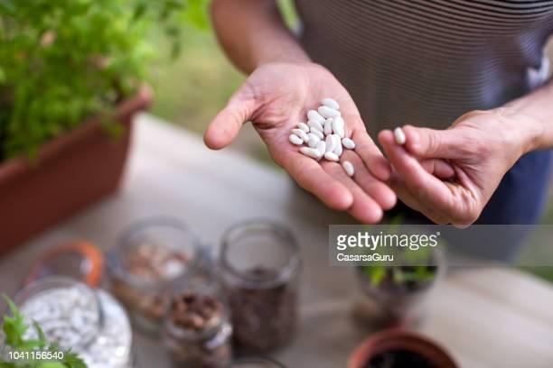 volwassen vrouw met homegrown witte bonen in hand - zaad stockfoto's en -beelden
