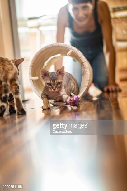 adult woman pet owner enjoying watching her playful kittens - stock photo - cat's toy stock pictures, royalty-free photos & images