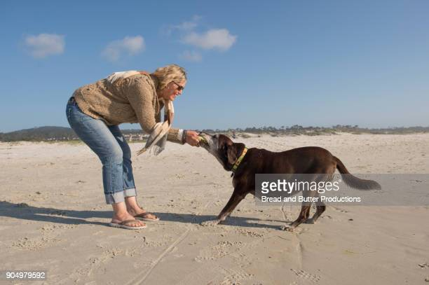 adult woman playing tug of war with dog on the beach - dogs tug of war stock pictures, royalty-free photos & images