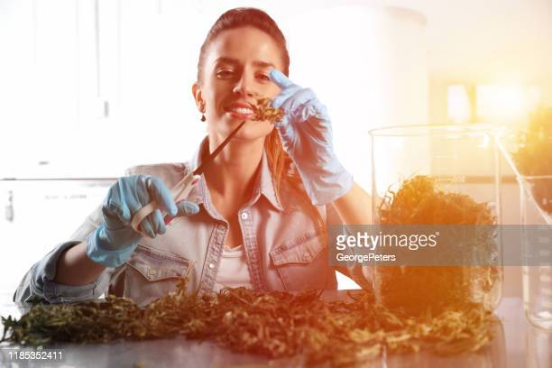 adult woman trimming medical cannabis buds - cannabis store stock pictures, royalty-free photos & images