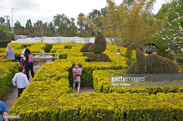Adults and children in shrubbery maze near topiary