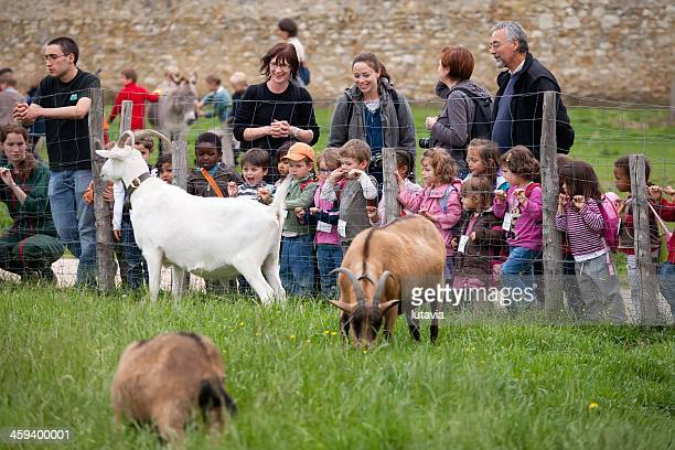 adults and children look at animals on the farm marii-antuanetty - lutavia stock pictures, royalty-free photos & images