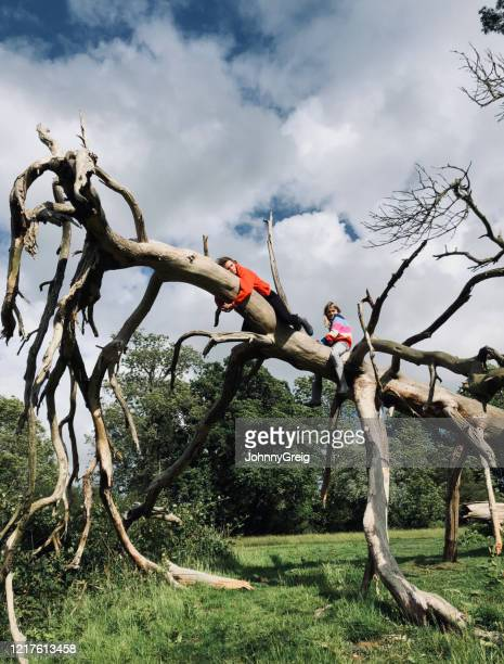 adventurous young girls climb on fallen tree - dead girl stock pictures, royalty-free photos & images