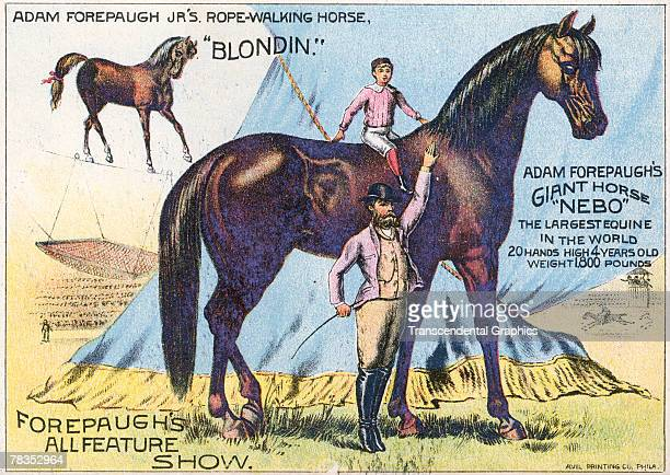 Advertisement for Forepaugh's All Feature Show which hihlights 'Nebo' billed as the 'Largest Equine in the World' and 'Blondin' a 'ropewalking horse'...