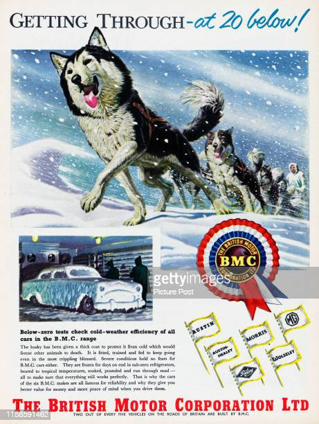 Advertisement for the British Motor Corporation Ltd showing sled dogs and the caption 'Getting through at 20 below' Original Publication Picture...