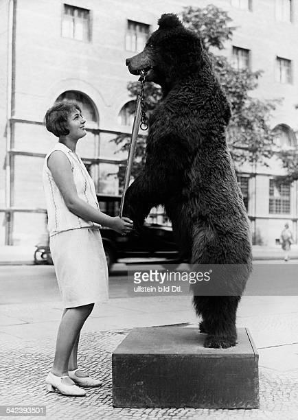 Advertising A stuffed bear advertising for a shop in Berlin - 1929 - Vintage property of ullstein bild