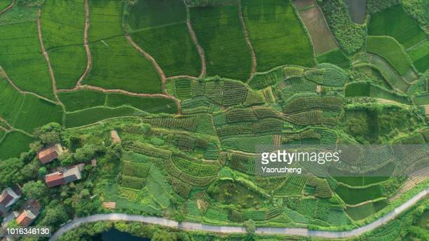 aeria view of rice plantation and hill with typical village in Anhui province,CHina