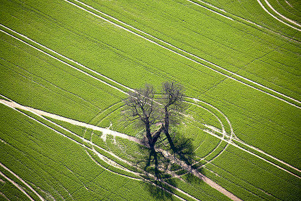Aerial abstract view of oak trees and track