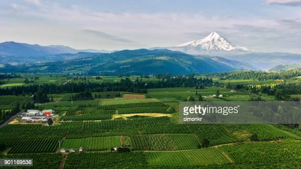 aerial agricultural land with mount hood in background - mt hood stock pictures, royalty-free photos & images