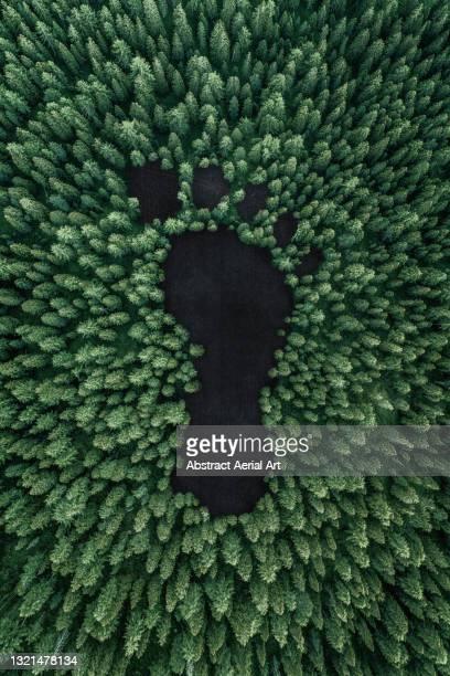aerial concept idea showing a carbon footprint in a forest, united states of america - las américas fotografías e imágenes de stock