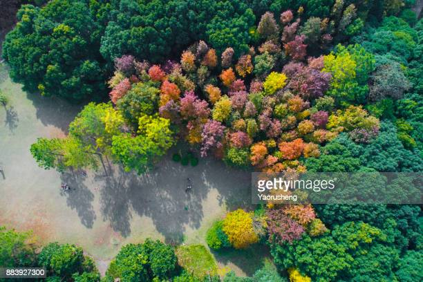 Aerial drone view of autumn colors flying over a forest