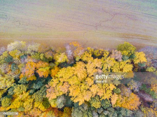 aerial drone view of cultivated land and forest in germany during autumn - schleswig holstein stock photos and pictures
