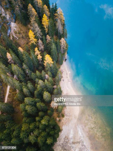 aerial drone view of forest and alpine lake - pragser wildsee stock pictures, royalty-free photos & images