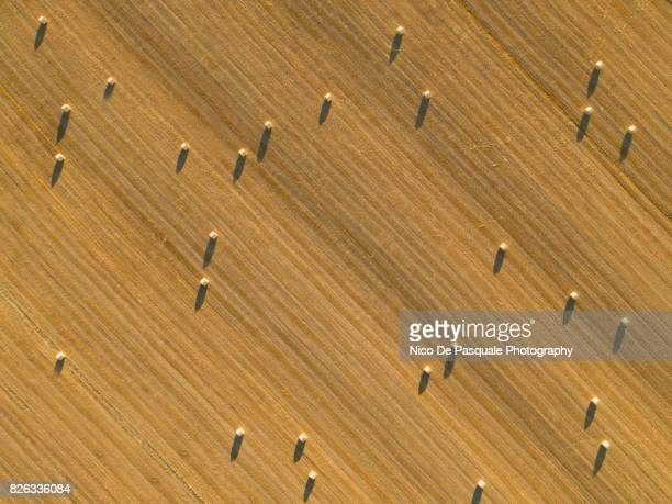 Aerial drone view of plowed wheat field