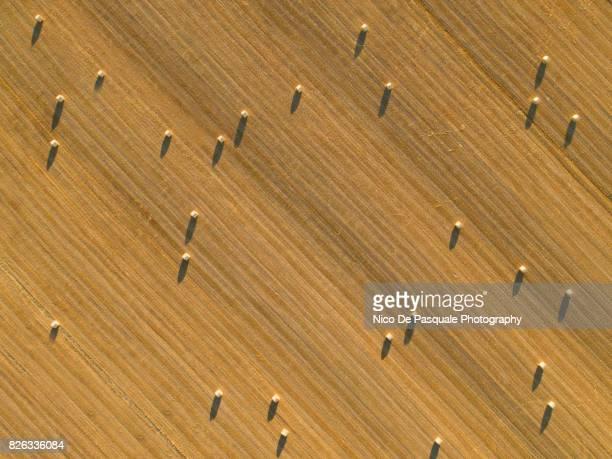 aerial drone view of plowed wheat field - kulturpflanze stock-fotos und bilder