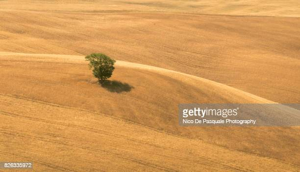 aerial drone view of tree in plowed field - nico de pasquale photography stock pictures, royalty-free photos & images