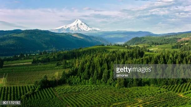 aerial farmland with beautiful view of the mount hood - noroeste do pacífico imagens e fotografias de stock