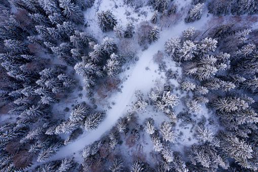 Aerial image of a forest covered in snow - gettyimageskorea