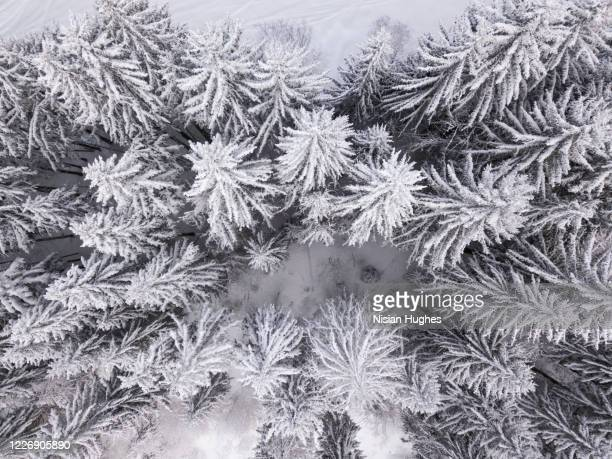 aerial image of a forest of pine trees covered in snow daytime - treetop stock pictures, royalty-free photos & images