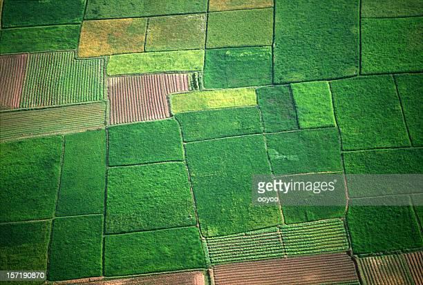 image aérienne de champ