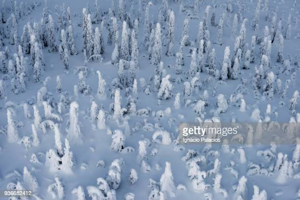 Aerial images of Finish frozen forests