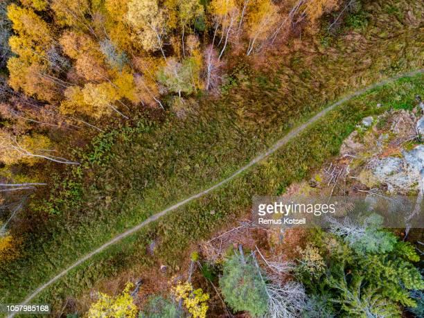 Aerial landskap av en gångstig i en skog