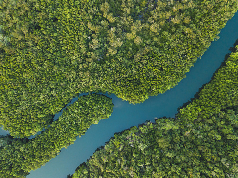 aerial landscape of winding river in forest by drone 1155074339