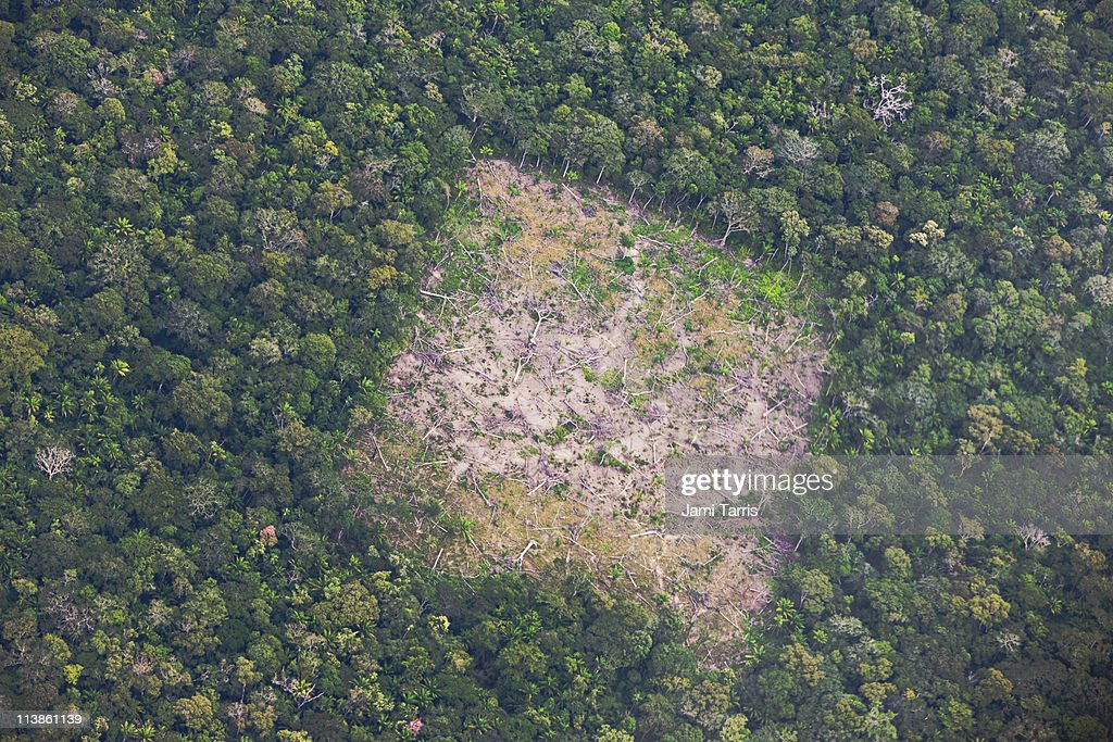 Aerial of Amazon rainforest destruction : Stock Photo