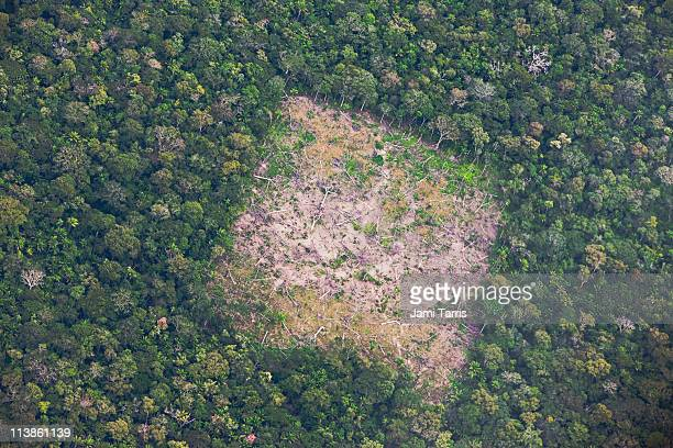aerial of amazon rainforest destruction - deforestation stock pictures, royalty-free photos & images