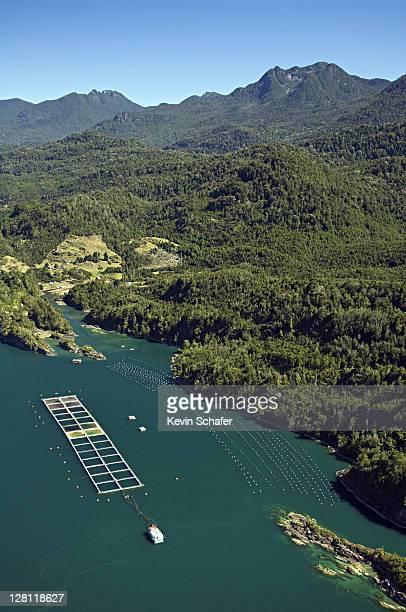 Aerial of aquaculture: salmon and mussel farms, Estero de Reloncavi, Puerto Montt area, Chile