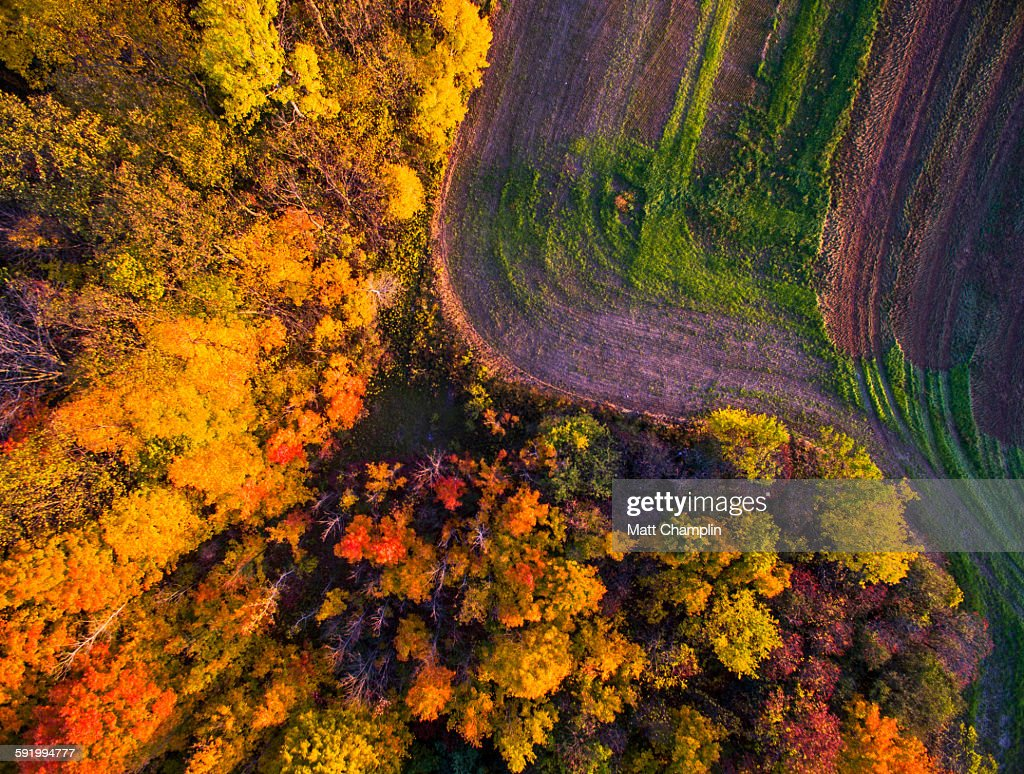 Aerial of Autumn woods and farm fields : Stock Photo