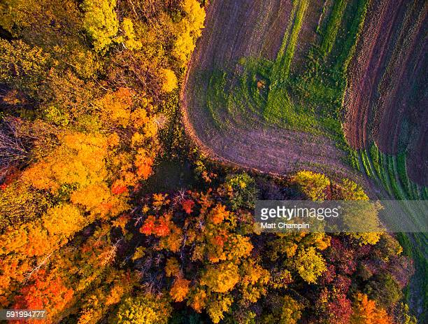 Aerial of Autumn woods and farm fields