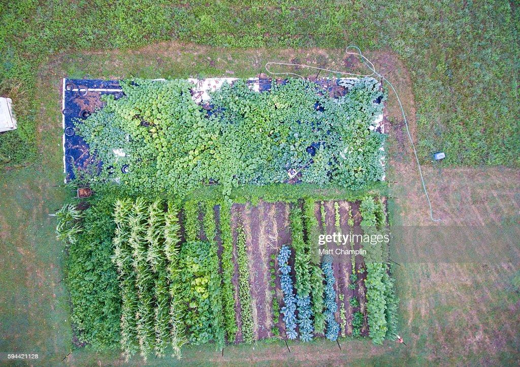 Aerial of Backyard Garden : Stock Photo