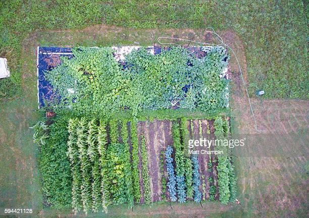 Aerial of Backyard Garden