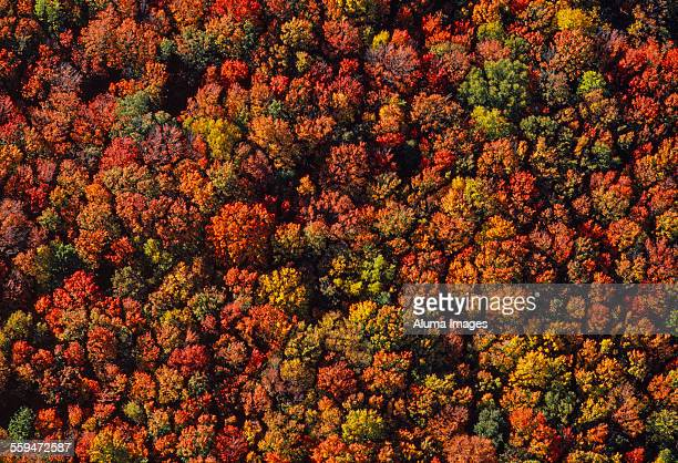 Aerial of deciduous forest in autumn